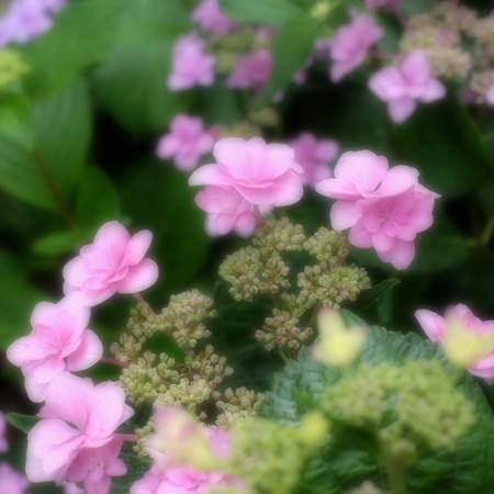 Fujifilm_xt10120335