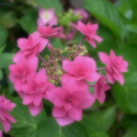 Fujifilm_xt10120535