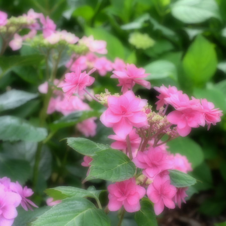 Fujifilm_xt10120635