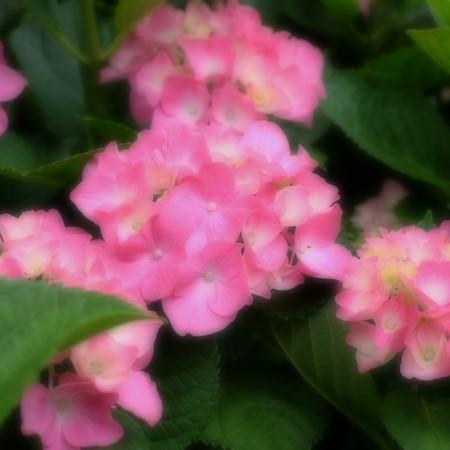 Fujifilm_xt10123635