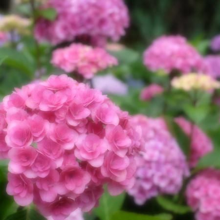 Fujifilm_xt10125735
