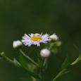 春紫苑 (はるじおん)